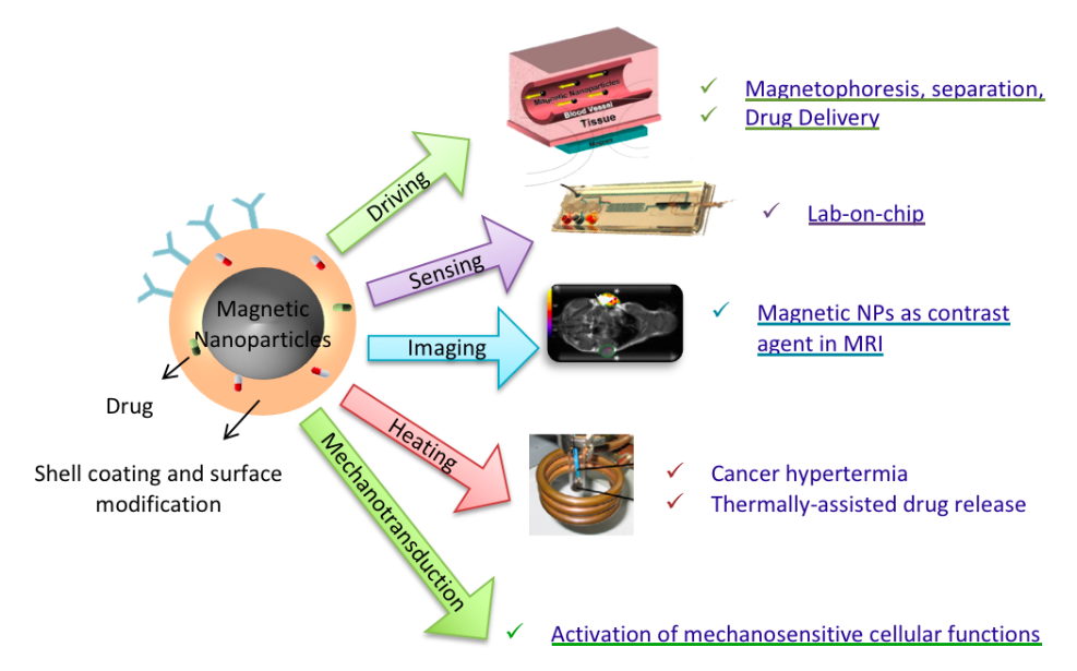 Biomedical applications of magnetic NPs