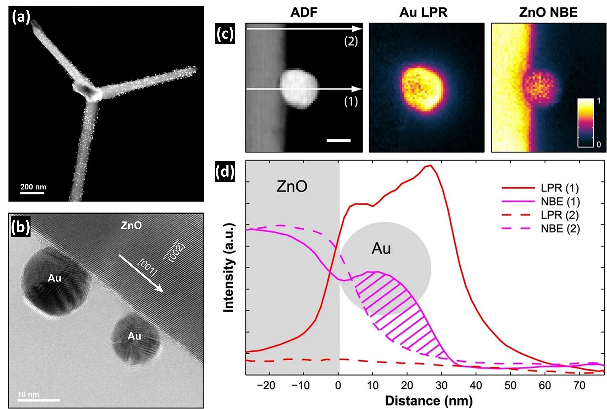 Nanoscale mapping of plasmon and exciton